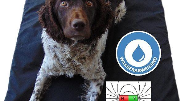 Magnetfeldmatte hilft alten Hunden