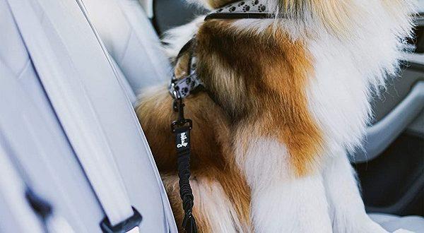 Hundegurt – Anschnallen & ab geht`s