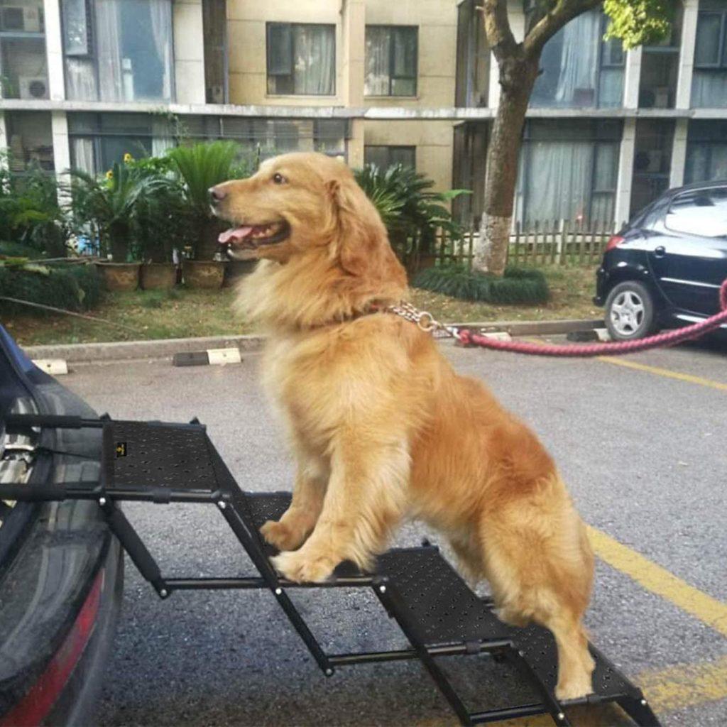 Hundetreppe Auto